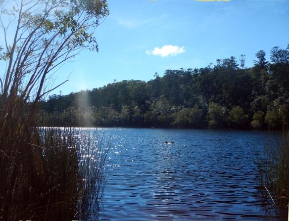 Swimming in Lake Allom